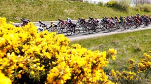 Group of cyclist at Tour De Yorkshire riding past a field